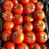 بذر گوجه مارال