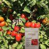 بذر گوجه اس جی 5